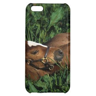 横になっている純血種の子馬 iPhone5Cケース