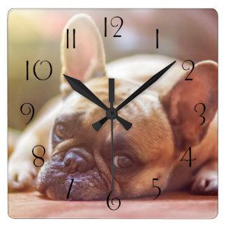 横になっている豪華なフレンチ・ブルドッグ スクエア壁時計