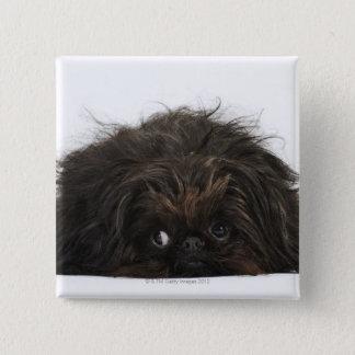 横になっているPekingese黒い犬 5.1cm 正方形バッジ