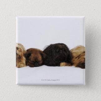 横になっているPekingese 3匹の犬および独身のなパグ 5.1cm 正方形バッジ