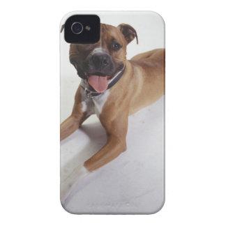 横になるアメリカ(犬)スタッフォードテリア Case-Mate iPhone 4 ケース