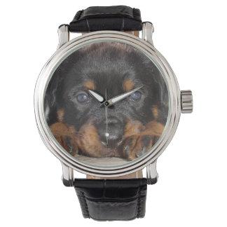 横になる大きい足を搭載するロットワイラーの子犬 腕時計