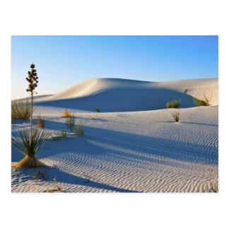 横断砂丘、ユッカ、早朝ライト ポストカード