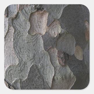 樹皮のマクロ写真撮影 スクエアシール