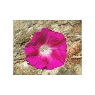樹皮-ピンクの朝顔 キャンバスプリント