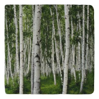 樺の木の森林 トリベット