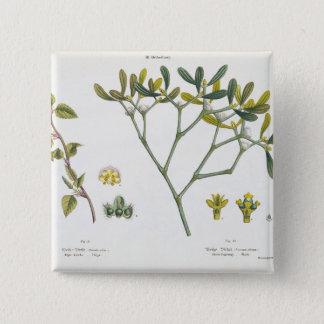 樺の木(残っている)およびヤドリギ(右の)、図9および10 缶バッジ