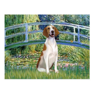 橋-アメリカFoxhound ポストカード