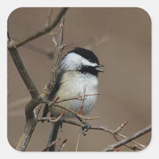 歌う《鳥》アメリカゴガラ スクエアシール