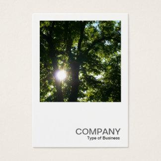 正方形の写真0254 -木を通した日曜日 名刺