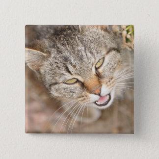 正方形ボタン-この甘い子猫を特色にします 5.1CM 正方形バッジ