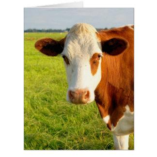 正面図のFriesian牛 カード