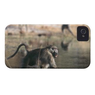 歩いているChacmaヒヒ(Papioのursinus) Case-Mate iPhone 4 ケース