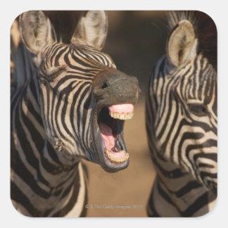 歯を示しているシマウマのクローズアップ スクエアシール