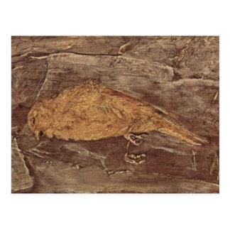 死んだ鳥 ポストカード