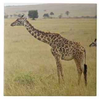 母およびベビーのマサイ族のキリン、Giraffa 2 タイル