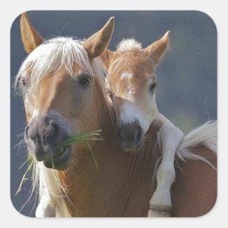 母およびベビーの馬 スクエアシール