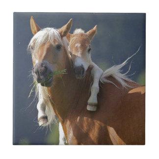 母およびベビーの馬 タイル