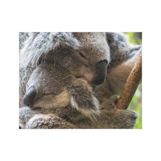 母および赤ん坊のjoeyのコアラの眠った抱きしめること キャンバスプリント