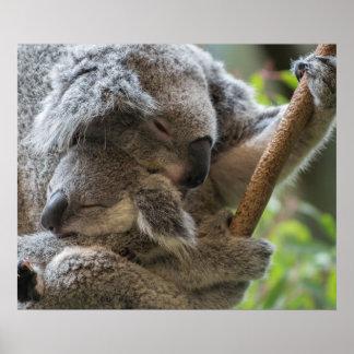 母および赤ん坊のjoeyのコアラの眠った抱きしめること ポスター