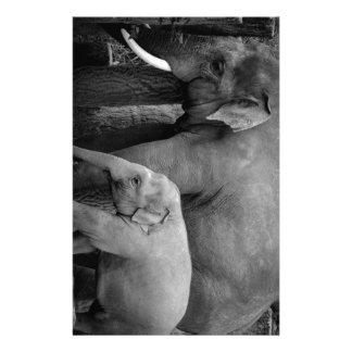 母および赤ん坊象 便箋