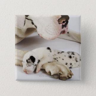 母で眠っている道化師のグレートデーンの子犬 5.1CM 正方形バッジ