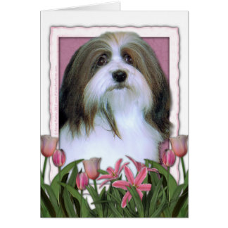 母の日-ピンクのチューリップ- Havanese カード