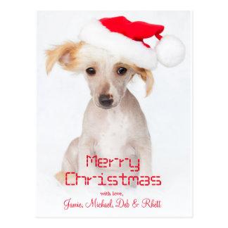 毛のない中国語によって頂点に達される犬 ポストカード
