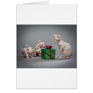 毛のないCATのクリスマス カード
