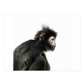 毛深いベビー猿 ポストカード