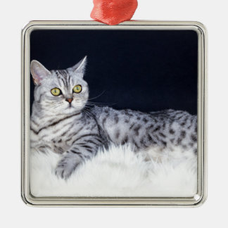 毛皮にあっているイギリスの短い髪の銀の虎猫猫 メタルオーナメント