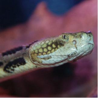 気色悪いヘビ 写真彫刻(台付き)