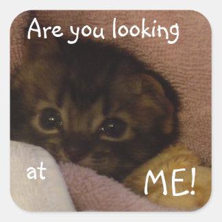 気難しいベビー猫 スクエアシール