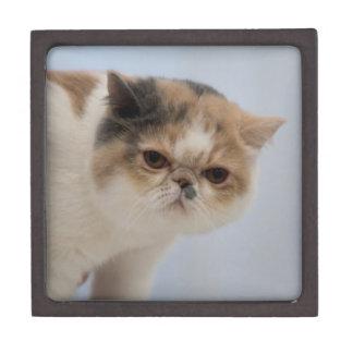 気難しい顔猫 ギフトボックス