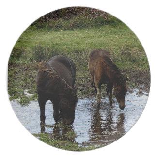 水たまりで飲んでいるDartmoorの2頭の子馬 プレート