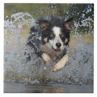 水で跳んでいるボーダーコリー タイル