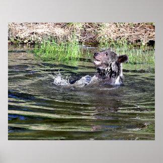 水で遊んでいる灰色グマ ポスター