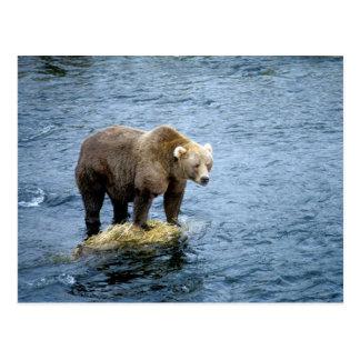 水のアメリカ人のヒグマ ポストカード