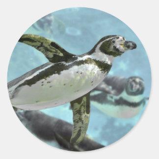 水の下のフンボルトのペンギン ラウンドシール