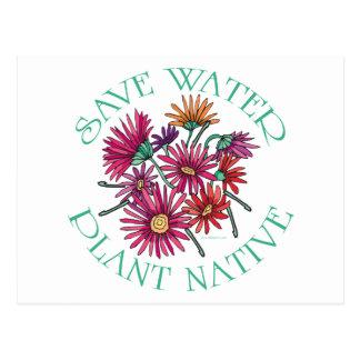 水の植物の先住民を救って下さい 葉書き
