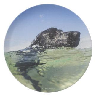 水の犬の水泳 プレート