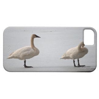 水の端で手入れをしている白鳥 iPhone SE/5/5s ケース