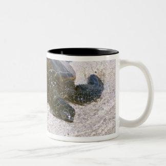 水の端 ツートーンマグカップ
