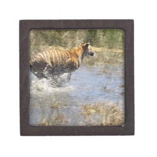 水を通るトラ(ヒョウ属チグリス川)のランニング ギフトボックス