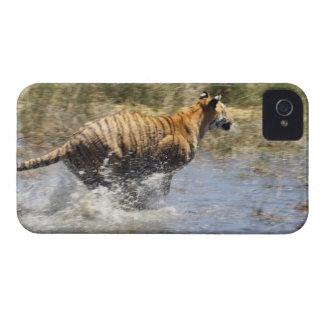 水を通るトラ(ヒョウ属チグリス川)のランニング Case-Mate iPhone 4 ケース