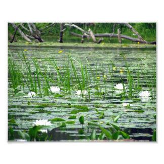 水ユリの写真のプリント フォトプリント