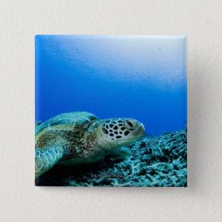 水中に休んでいるウミガメ 5.1CM 正方形バッジ