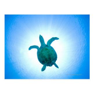 水中に泳いでいるウミガメ ポストカード