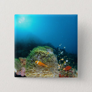 水中に泳いでいるモルディブのアネモネ魚 5.1CM 正方形バッジ