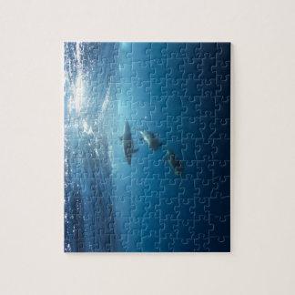水中に泳ぐイルカのポッド ジグソーパズル